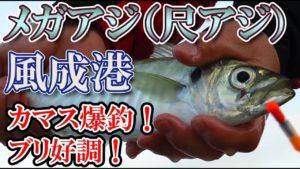 動画:メガアジ(尺アジ) カマス爆釣! ブリ好調! 臼杵 風成港(かざなしこう)大分の釣り場 釣りガールも安心の堤防