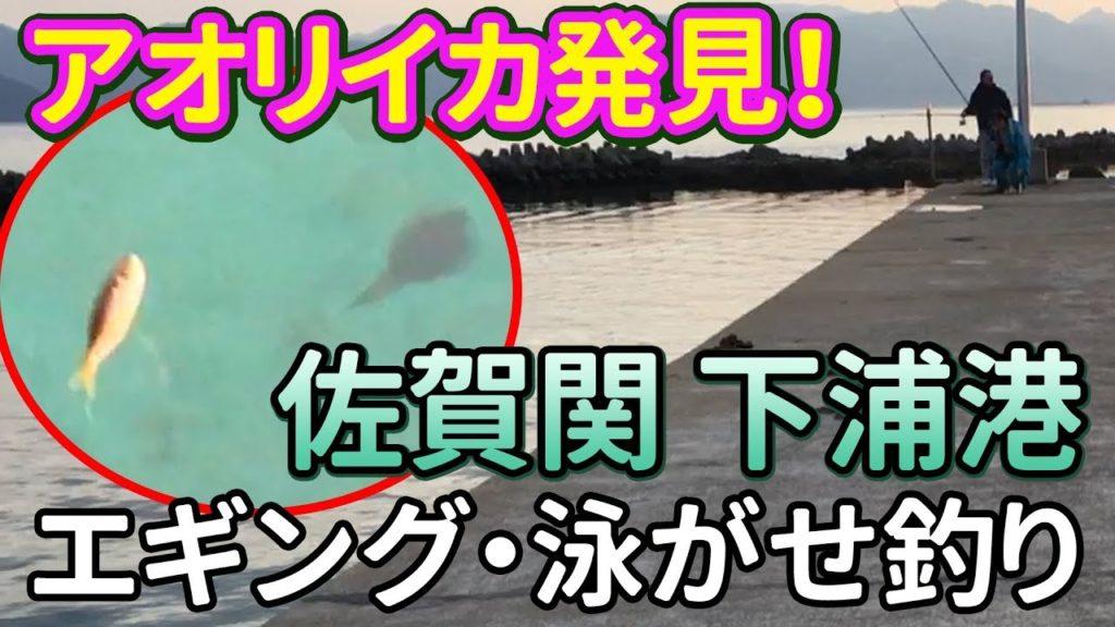動画:アオリイカ発見!大分の釣り場 佐賀関下浦港の魚影 エギング 泳がせ釣り 釣りガールも安心の堤防