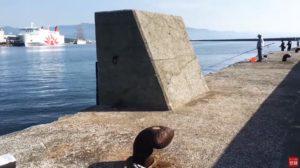 動画:エギングとアジ釣り 国際観光港の様子 オリアナ桟橋 釣りガールも安心の堤防
