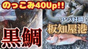 動画:チヌ(黒鯛)40Up! アジ好調! メガアジ(尺アジ)狙いも多い人気の釣り場 臼杵 板知屋港 GW 夏休み 家族連れもおすすめ 釣りガールも安心の堤防