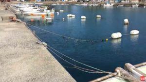 釣り場ライブ配信 メガアジやブリが釣れる風成港 アジング 泳がせ釣り エギング アオリイカ