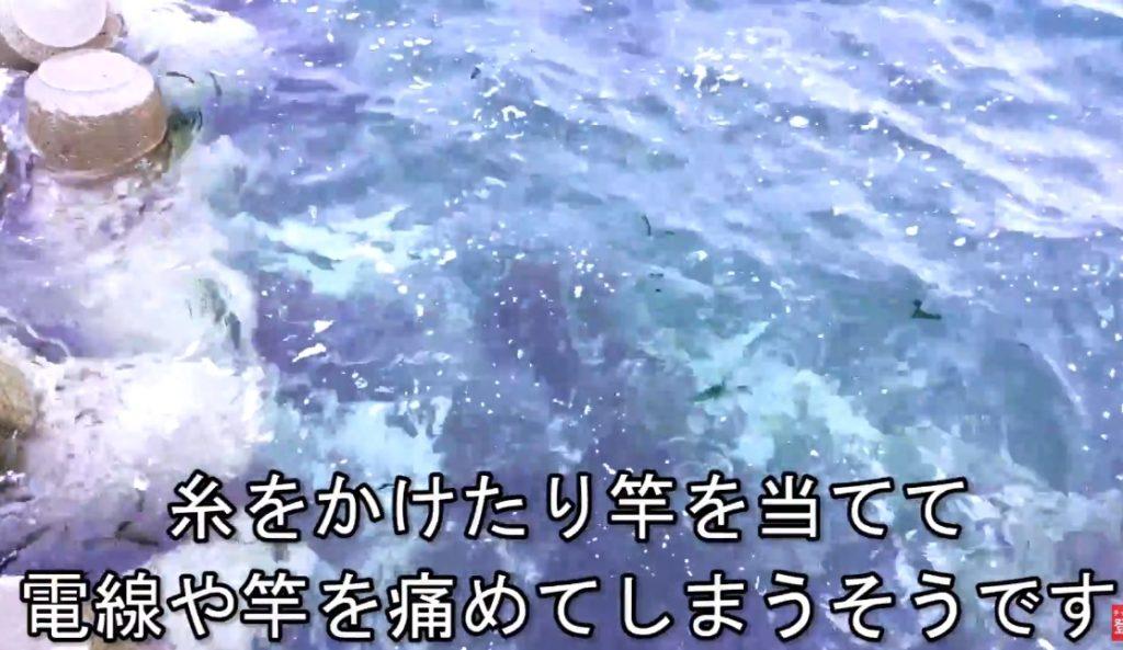 動画:貴重で珍しい島がある網代(あじろ)の港 津久見 四浦半島 網代港 【頭上注意】