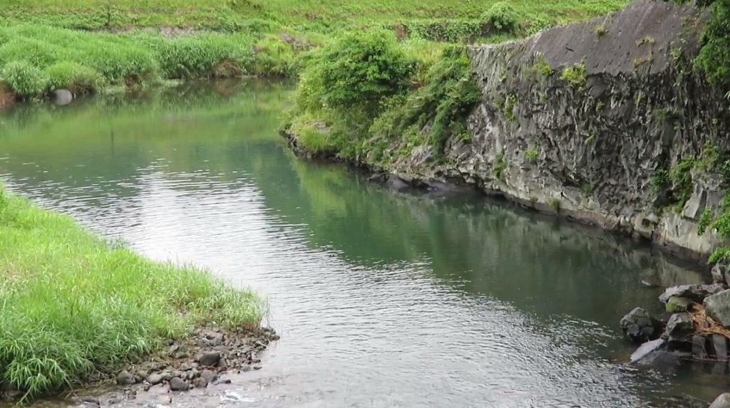 清らかな癒しの川 大野川水系 入田河川プール上流 大分 釣りスポット ヤマメ アマゴ エノハ コイ