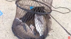 釣り場ライブ配信:秋のタチウオ アジ釣りで人気 大在公共埠頭
