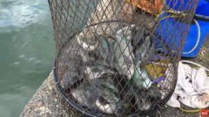 釣り場 ライブ配信:乙津泊地 パン粉でフカセ釣り タチウオ グレ(メジナ) チヌ(クロダイ) ワインド ショアジギング