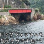 動画:福良港 アジのカゴ釣り 四浦半島 津久見の釣り場 釣りガールも安心の堤防