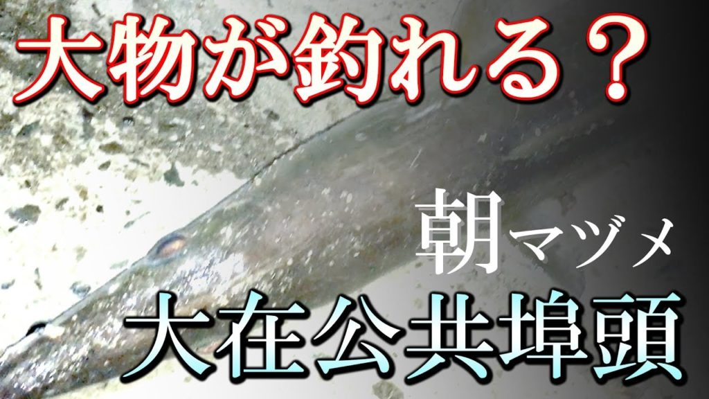 動画:大物が釣れる? 大在公共埠頭の朝マヅメ 人気のアジサビキとショア(陸)から釣れる大きな魚 タチウオ タイ ハモ