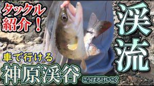 動画:渓流の女王 アマゴ・ヤマメ釣り 車で行ける神原渓谷 トラウトルアータックル紹介 釣り場をドローン撮影 釣りガールも釣りやすい渓流